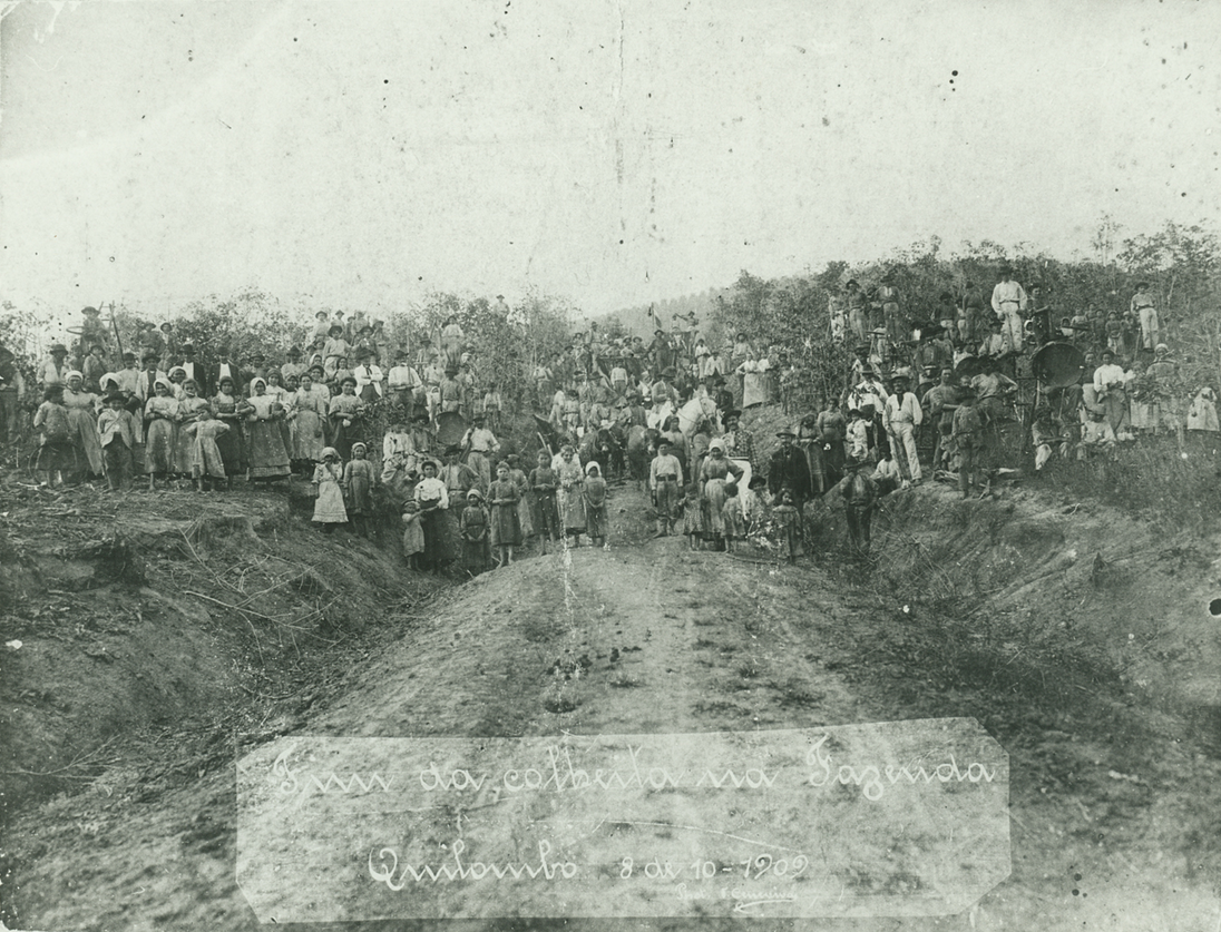 Colheita na Fazenda Quilombo, 1909